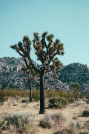Desert-20