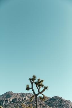 Desert-21